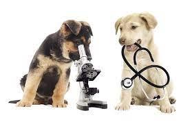 due cani con telescopio